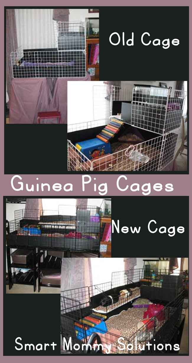 ginea-pig-cages-old-and-new
