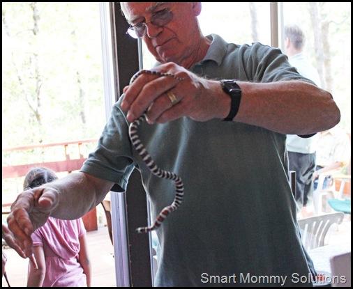 king snake 2web